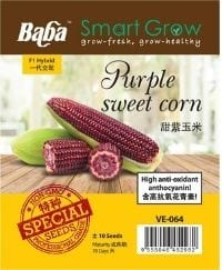 VE-064 PURPLE SWEET CORN