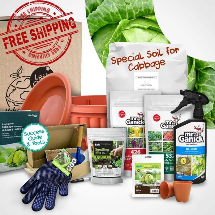 Urban Farming Package - Cabbage | Vegetable Garden | Home Garden | Baba Gardening