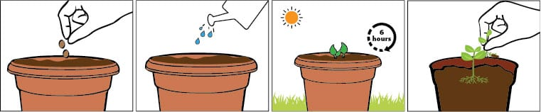 Okra Sowing Tips   Gardening 园艺 Kursus Pertanian   Organic Fertilizers 有机肥料 Baja Organik   Garden Tools 居家园艺工具 Peralatan Taman   Baba Gardening